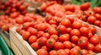 Pusiyaya pomidor ixrac edən neçə şirkətimiz var? – Sayları ARTACAQ