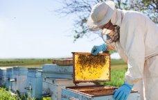 FACİƏNİN KANDARINDA: Türkiyədə yanğınlar zamanı 90 min arı ailəsi məhv olub