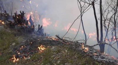 Yardımlıda meşə yanır: əraziyə helikopter göndərildi