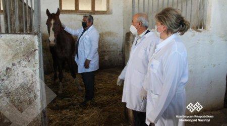 Şəkidə aclıqdan əziyyət çəkən atlar qida ilə təmin olundu – FOTOLAR